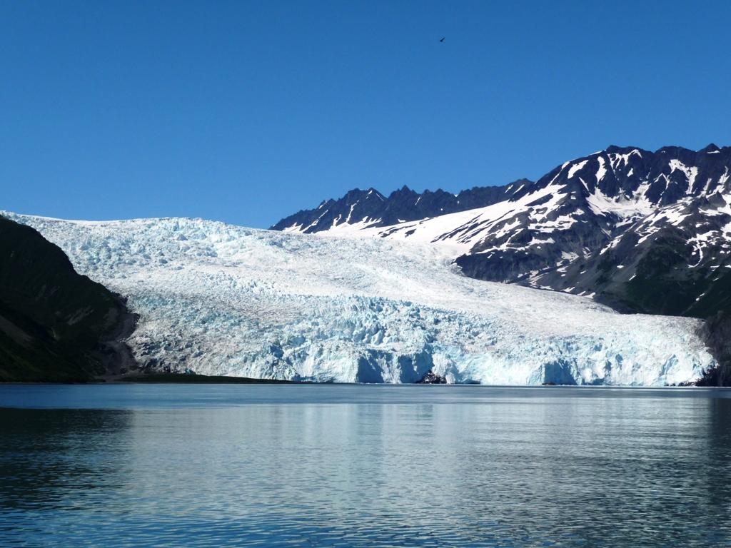 excellent Alaska SeaLife Center (the only public aquarium in Alaska ...