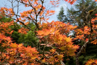 small mg 2039 Photos: Japanese Garden at Seattle Arboretum