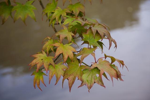 smallimg 2036 Photos: Japanese Garden at Seattle Arboretum