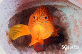 20061203 Grouper thumbnail v2 Website Images